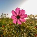 Comment embellir votre jardin avant une vente immobilière